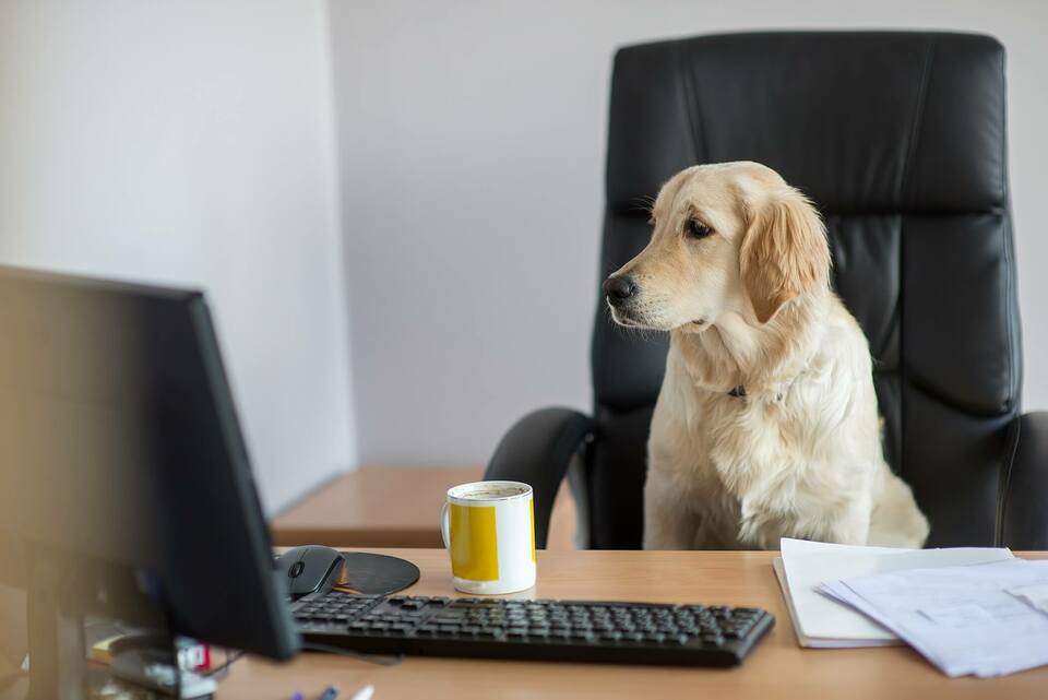 perks bring your dog to work day dog at a desk