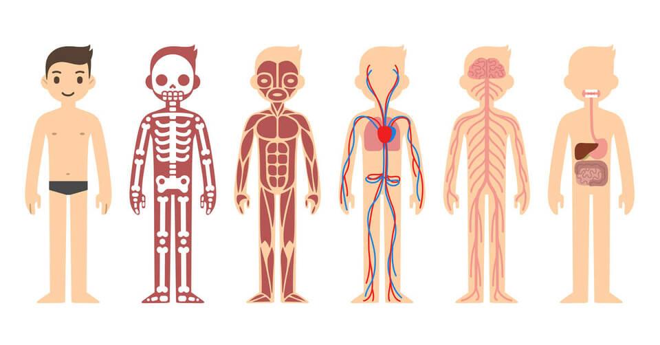 modern day anatomy
