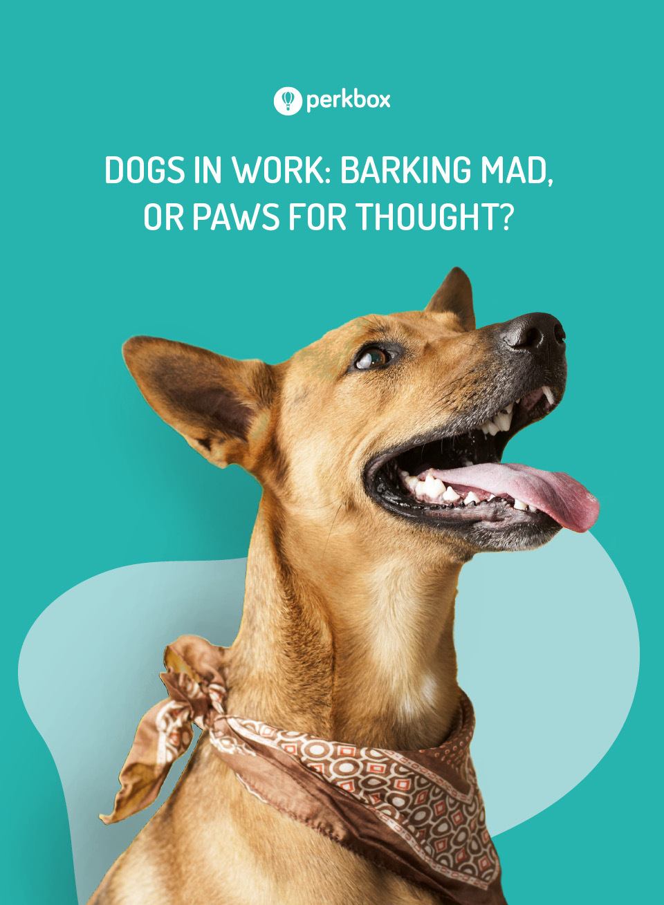 Dogs in work: barking mad or paws for thought?